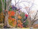樹上満喫 木のぼりツアーの様子