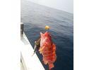 【沖縄・宮古島】初心者も手軽に手ぶらでOK!体験釣り半日コース フィッシングの様子
