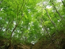 【青森・白神山地】トレッキング/ブナ林散策道満喫コースで神秘の自然を五感で感じる!の様子