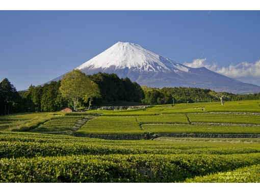 富士山ネイチャーツアーズ(Nature Tours)