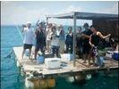 【沖縄・国頭】仲間でわいわい楽しめます!イカダ貸切プラン!選べる昼・夜コース!の様子