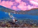 初心者専門ダイビングサービスサンフィッシュ石垣島(Sun Fish Ishigakijima)