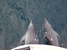 【熊本・天草】天草国立公園の象さん岩クルージング!イルカウォッチング&SUP体験の様子