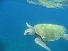 【鹿児島・屋久島】黒潮の恵みを受けた屋久島の海でシュノーケリング体験(半日コース)の様子