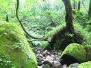【富山・立山山麓】森林セラピー(リフレッシュコース)の様子
