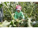 【北海道十勝・農業体験】農場をピクニック!おやつツアーの様子
