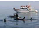 【北海道・知床】大自然の海でクジラやイルカに出会える。未体験のクルージングの旅への様子