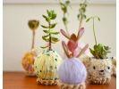 【栃木・高根沢町】プクプク&もこもこが可愛い♪「毛糸のコケ玉®」教室の様子