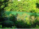 当日予約OK!【沖縄/嘉手納】ジャングルのように茂った比謝川で、マングローブカヤックツアー!の様子