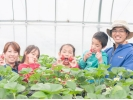 【滋賀・東近江】9種類を食べくらべ!イチゴ狩り体験の様子