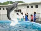 【高知・室戸岬】イルカにサインを出してみよう!〔トレーナー体験〕の様子