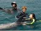 【高知・室戸岬】室戸岬でイルカと泳ごう!〔ドルフィンスイム〕の様子