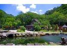 栃木県日光市【渓流釣り3時間】 緑の香りと透き通る清流を満喫! ※釣りたてのお魚を炭火焼きにできますの様子