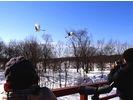 【北海道・釧路湿原】特別天然記念物 タンチョウに逢う!(半日コース)の様子