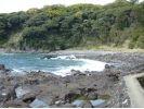 【神奈川・湯河原】自然ガイドと歩く!真鶴半島ハイキングの様子