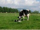 【北海道・十勝清水】「日本じゃないみたい!」な牧場で酪農体験の様子