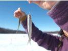 【北海道・網走】冬プログラム一番人気!網走湖ワカサギ釣り体験~釣った魚はその場で天ぷらに~の様子