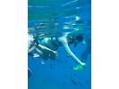 【沖縄・慶良間】大珊瑚礁シュノーケリングプラン(餌付け体験付き)の様子