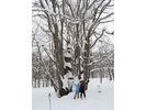 【北海道・大雪山】絶景スノーシュー★天人峡 森の神様コースの様子