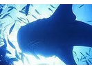 恩納村発【ジンベイザメに会いにいこう!】 Funダイビング ★器材レンタル込の様子