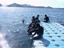 日本海でシュノーケル 山陰ジオパーク1日コースの様子