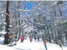 【群馬・万座温泉】万座カラマツ天然母樹林スノーシュー体験の様子