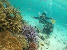 オーシャンズ石垣島(OCEANS)