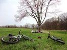 【長野県・浅間山】~高原をマウンテンバイクで駆け抜ける~MTBサイクリングツアー【MTB】の様子