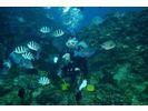 Ocean Blue(オーシャンブルー)