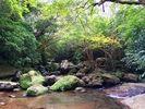 【Y-1】西表島 半日ジャングル&由布島観光欲張りコース(スタンダード)★夏季バージョン★の様子