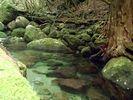 【屋久島】神秘の森トレッキングツアー【一日】の様子