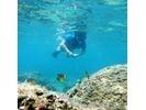 【鹿児島・種子島】気軽に熱帯魚観察・シュノーケリング(半日コース)の様子