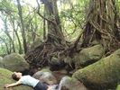 【鹿児島・屋久島】カヤック&トレッキングツアー(1日コース)の様子