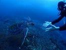 【屋久島 ダイビング 】ファンダイビング 2ビーチダイビング(1月~12月)の様子