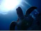 【屋久島 ファンダイビング】2ボートダイビング(器材レンタル込)【午前・午後】の様子