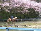 【福岡・鞍手】初心者向け!優しい馬に乗って騎乗体験プラン!の様子