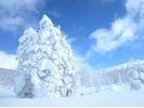 【北海道・登別温泉で山歩き】スノーシュー樹氷ウォーキングの様子