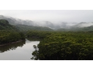 【沖縄・西表島】たっぷり堪能できます マングローブカヤッキング1日ツアー【カヤック】の様子
