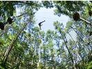 【山梨・富士山】森を遊びつくす!フォレストアドベンチャー(アドベンチャーコース)※団体割引あり!の様子