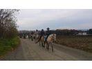 【北海道 函館 乗馬】手軽にホーストレッキング外乗 お散歩コース(30分)の様子