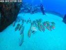 【東京・神津島でダイビング】2ダイブで伊豆諸島の海を満喫!ビーチからエントリーするファンダイブの様子