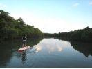【沖縄・石垣島】人気急上昇!秘境のマングローブ林の群生でSUP体験!の様子