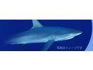【小笠原・父島】サメ釣り!ナイトフィッシングの様子