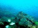 【熊本・天草】色とりどりの魚やサンゴたちがお出迎え!?スノーケルツアー(半日プラン)の様子