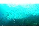 ディープマリン深島