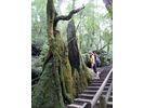 【屋久島】屋久杉ランド 巨木の森ツアー【トレッキング】の様子
