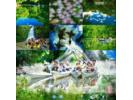 【沖縄・西表島】3つのコースから選べる サガリバナと静寂の滝【カヌー】の様子
