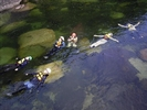 【鹿児島・屋久島】スポーツ要素だけでなく、じっくり自然と向き合える沢登り体験(1日ツアー)の様子