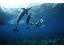 【東京都・三宅島】イルカ好き大集合!三宅島から行くドルフィンスイムの様子