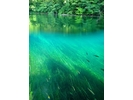 【北海道・支笏湖】国立公園 シュノーケルツアーの様子